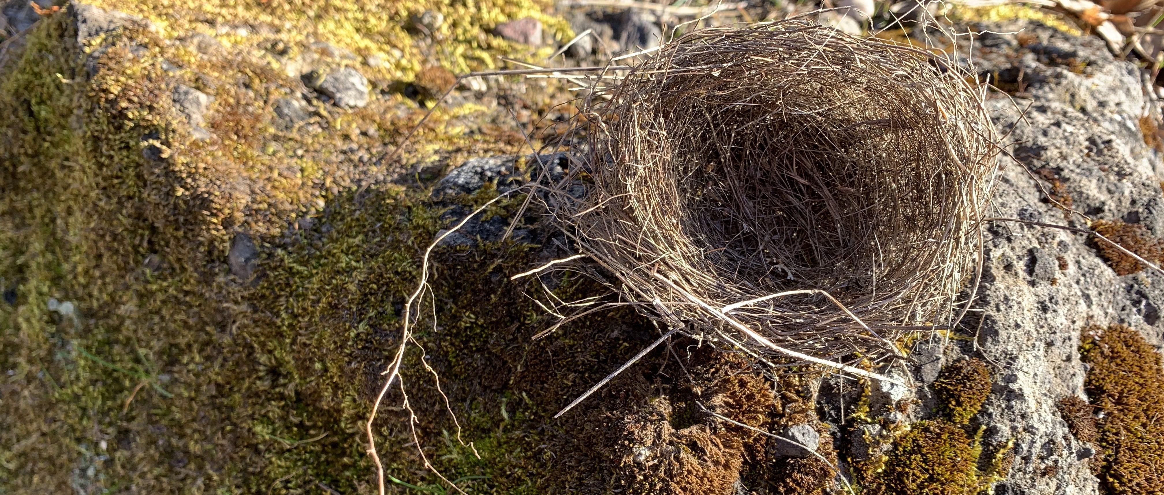 A Woven Basket